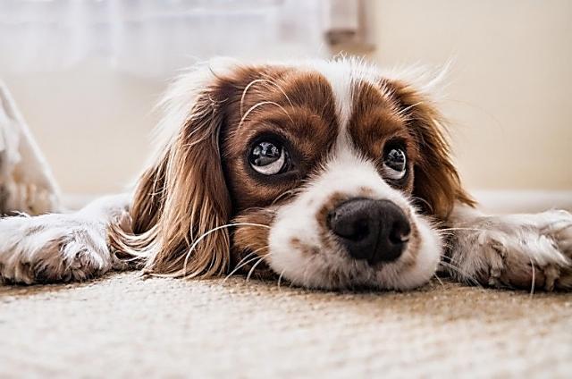 Hondon Valley Animal Charities